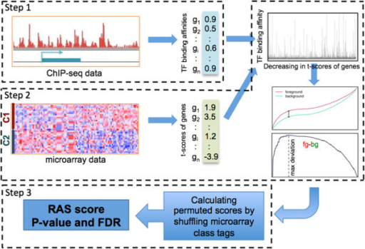 The workflow of REACTIN algorithm. Step 1: Measure of the binding affinity of a TF with all human genes using TIP. Step 2: Calculation of regulatory scores (RS) for all TFs. Step 3: Significance estimation and multiple-testing correction.
