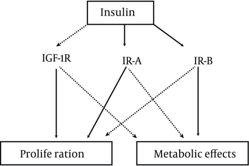 Effects of Insulin on Different ReceptorsIGF-1R: insulin-like growth factor-1 receptor; IR-A: type A insulin receptor; IR-B: type B insulin receptor.
