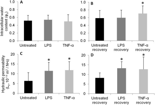 Mean intracellular water content (A, B) and mean hydraulic permeability (C, D) at 333 mOsm/L step for cells at (A, C) 24 hour and (B, D) 7-day recovery time points, respectively.*p<0.05 vs. untreated or untreated recovery control. n = 7–12 cells per condition.