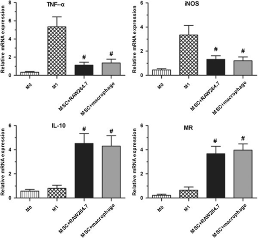 Effect of co-culture with MSCs on mRNA expression. MSCs reduce macrophage gene transcriptional activity of TNF-a and iNOS and promote gene transcriptional activity of IL-10 and MR in the RAW264.7 cell line and macrophages of the C57BL/6 strain. #P <0.01 versus M0 and M1. iNOS, inducible nitric oxide synthase; MSCs, mesenchymal stem cells.