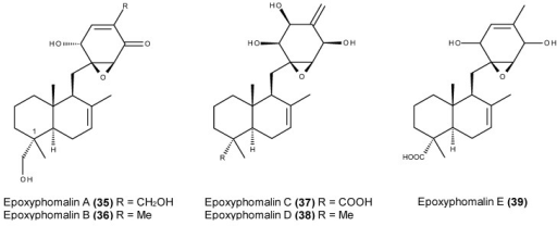 Structures of epoxyphomalins A–E (35–39).
