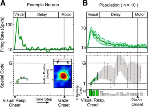 Single-neuron example and population results for V neurons. A shows the time-normalized spike density profile for an example V neuron (top) and the data points corresponding to the spatially tuned time steps across 16 half-overlapping time steps (bottom). The RF plot corresponding to the highlighted time step (bottom panel, light red circle with green boarders; first time-step here) is shown with the spatial code highlighted above the plot. B shows the population time-normalized post-stimulus time histogram (mean ± SEM) and the mean (±SEM) of the spatially tuned data points at these time steps across the V population. Colored data points (bottom) correspond to time steps at which the population spatial coherence was significantly higher than the pretarget baseline and gray shades correspond to eliminated time steps, with spatial coherence indistinguishable from pretarget baseline. The histogram shows the percentage of neurons at each time step that exhibited spatial tuning. The baseline firing rate is calculated based on the average firing rate in the 100 ms pretarget period is shown by the solid horizontal lines in spike density plots (A, B, top). For reference, the approximate visual, delay, and motor epochs are depicted at the top of the panels.