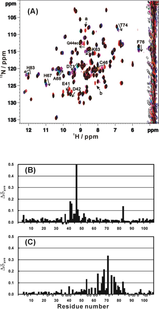 (A) Superposition of 1H-15N HSQC spectra of ferric cytochrome c3 at various pH values from pH 5.2 (red) through 7.0 (black) to 9.0 (purple). The direction of an arrow indicates the increase of pH value. (B, C) Average chemical shift differences (Δδave) between pH 5.2 and 7.0, and pH 7.0 and 8.5, respectively. Filled circles indicate the residues whose NH signals were assigned at pH 6.0 although not assigned at pH 7.018. Open circles indicate the residues whose NH signals were not detected at pH 8.5 although assigned at pH 7.0.