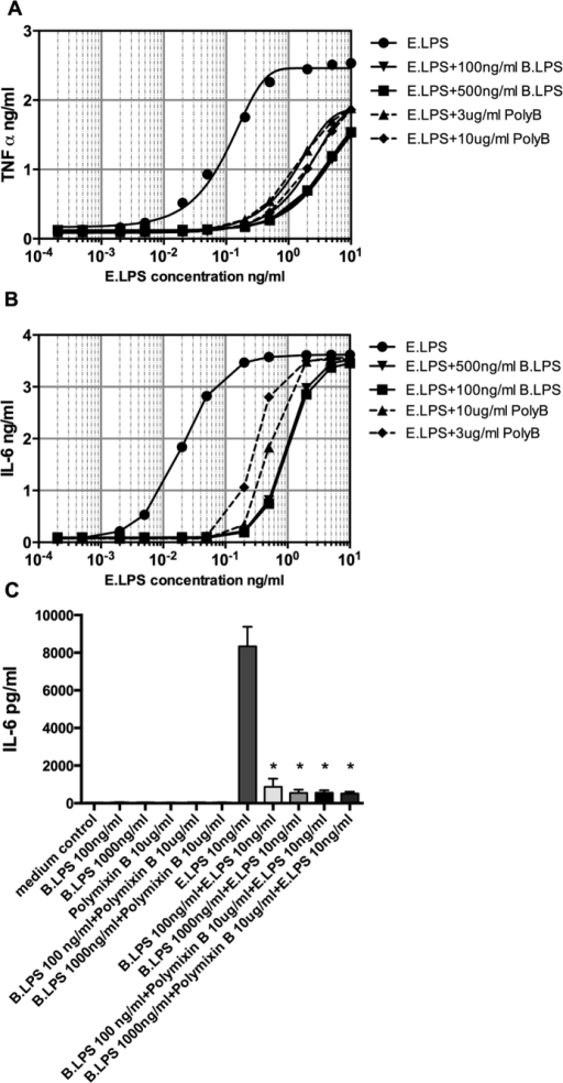 Comparison and interaction of B. quintana LPS with polymixin B.Human PBMCs were isolated from healthy subjects, using a standard protocol. (A,B) PMBCs were exposed to a dose range of E. coli LPS (0.0001 to 10 ng/ml) in the presence or absence of B. quintana LPS (100 and 500 ng/ml) or polymixin (B) (3 and 10 μg/ml). TNF-α and IL-6 were determined with ELISA. (C) B. quintana LPS (100 ng/ml or 1000 ng/ml) was pre-incubated with 10 μg/ml polymyxin B for 2 h. Thereafter control medium, B. quintana LPS, polymyxin (B) B. quintana LPS + polymyxin B were added to the PBMCs for 2 h and thereafter the cells were washed 3 times with warm RPMI 1640 medium. After washing, RPMI 1640 medium or E. coli LPS (10 ng/ml) was added and the PBMCs were incubated for 24 h. IL-6 was determined by using ELISA. PBMCs of 4 subjects were used in this experiment. *P < 0.001, two-sided Mann-Whitney U test.