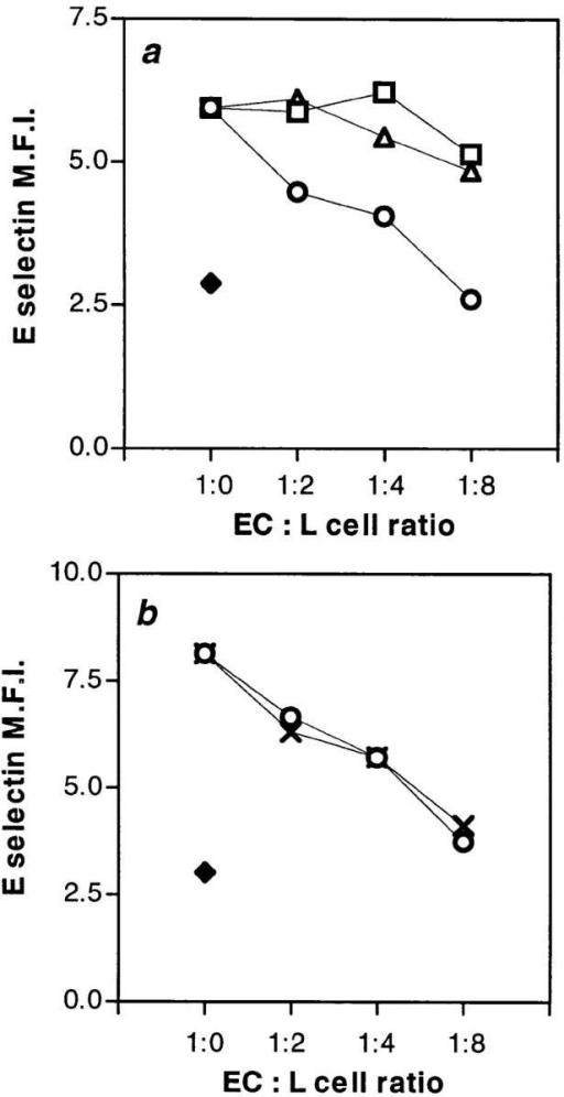PECAM-1–transfected  L cells regulate E-selectin expression. (a) EC at subconfluent  density (0.2 × 105 cells per cm2)  were plated in the presence or  absence of various concentrations of PECAM-1–transfected L  cells (○, full-length PECAM-1;  □, domain 2 deletion mutant; ▵,  untransfected L cells). EC were  also plated at high density (♦).  A ratio of 1 EC to 8 L cells  would be equivalent in cell number to a high density culture of  EC. 18 h later, cells were harvested and stained with goat  anti–E-selectin polyclonal antibody and detected using an  anti–goat labeled polyclonal antibody together with a mouse  anti–VE-cadherin antibody and  detected with an anti–mouse,  FITC-conjugated antibody. Cells were analyzed by two color  analysis, and only the fluorescein positive (i.e., EC) were analyzed for E-selectin expression. The results are given as the MFI  of one representative experiment of at least four performed  where a similar trend was seen in each. (b) Subconfluent EC  were plated as in a but either the full-length, PECAM-1 L cell  transfectants (○), or cytoplasmic tail deletion mutant (X). Analysis was as for a and is given as the MFI of a representative experiment of at least four performed.
