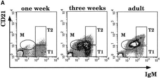 T1 B cells are the precursors of T2 and mature B cells. (A) Splenocytes of 1- (left) and 3- (center) wk-old and adult (right) C57BL/6 mice were stained with Abs to CD21 and IgM and analyzed by flow cytometry. (B) Splenic cells from recipient RAG-2−/− mice were analyzed at the indicated times after transfer of 2 × 106 splenic B cells from a pool of 1-wk-old mice. Cells were stained with Abs to IgM, IgD, and CD21. Top panels, IgM vs. IgD staining. Bottom panels, the CD21 vs. IgM profile of IgD+IgM+ donor B cells. 200,000 events were collected. Data is shown as dot plots to highlight the few transferred cells that home to the spleen. In the dot plots corresponding to the control (adult) spleen, only 5% of the collected events are shown.