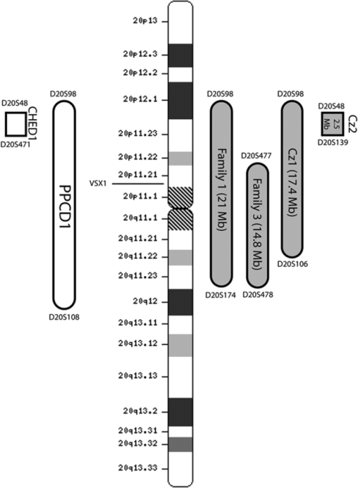 Ideogram of chromosome 20 showing PPCD1 minimal disease interval in different families. Bars on the left represent the disease intervals for PPCD1 and CHED1 as originally described [6,10]. Bars on the right show the refinements made in our study. Family 1 is the family used for mapping the locus (further refinement). Family 3 is the family described by Heon et al. [11] with a known VSX1 mutation. Cz1 and Cz2 represent Czech families described by Gwilliam et al. [39].