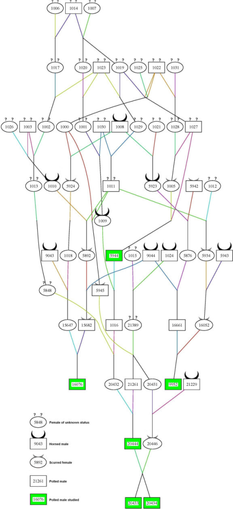 Pedigree of the six sires from the FPCP nucleus. The pedigree was designed using PEDIGRAPH 2.3 software [25]. Lines are drawn in different colours to better visualize the relationships between individuals.