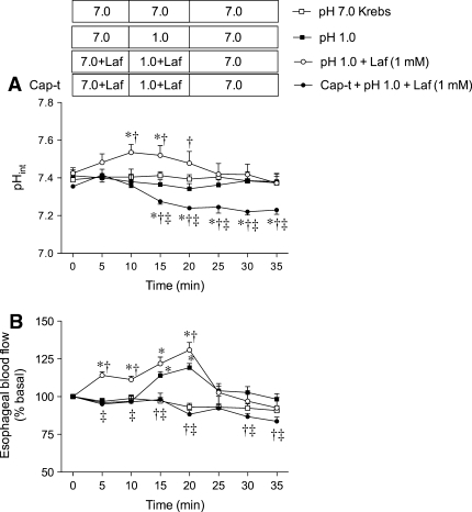 Effect of Laf with acid on pHint and blood flow in rat esophagus. A pH 1.0 solution was perfused with or without Laf (1 mM). Laf was perfused during the basal and challenge periods (0–20 min) in the pH 1.0 + Laf and in the Cap-t (capsaicin pretreated) + pH 1.0 + Laf groups. The boxes above the graphs represent the perfusate combination for the corresponding groups. Pretreatment with Laf increased pHint (a) and blood flow (b), and enhanced acid-induced hyperemia. Cap-t abolished the effects of Laf perfusion and further decreased pHint. Data are expressed as mean ± SEM (n = 6). * p < 0.05 versus pH 7.0 Krebs group, † p < 0.05 versus pH 1.0 group, ‡ p < 0.05 versus pH 1.0 + Laf group