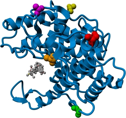 Sites of cysteine substitution.Ribbon diagram of alginate Lyase A1-III (PDB file 1HV6). A trisaccharide                            reaction product is bound in the active cleft and shown as a grey ball                            and stick model. Amino acid residues targeted for cysteine substitution                            are shown in space filling mode, and are color coded as follows:                            S32C = Red, A41C = Orange,                            A53C = Green, A270C = Yellow,                            and A328C = Purple.