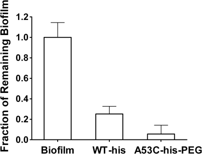 Disruption of mucoid P. aeruginosa biofilms.Adherent biofilms of a mucoid clinical isolate were established in                            96-well plates and subsequently treated with 1 mg/ml enzyme for 1 hour.                            Remaining biofilm was then quantified using an alginate-sensitive                            lectin-HRP conjugate and ABTS substrate. Signals were normalized to a                            buffer only treatment. Both enzymes removed a significant proportion of                            biofilm relative to the buffer control (p<0.01). Importantly,                            theA53C-his-PEG enzyme removed >15% more biofilm than the                            WT-his enzyme (p<0.025). Error bars represent standard deviation.