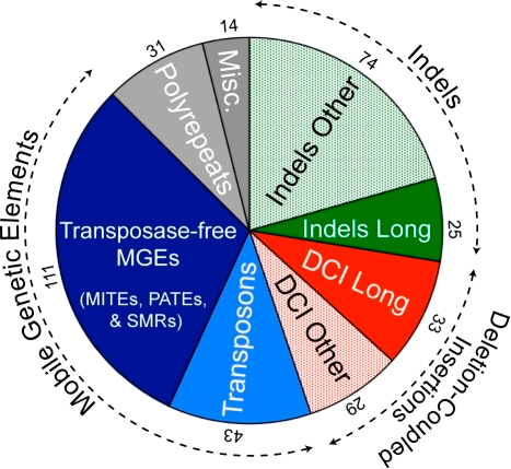 Categories of strain-specific regions, plotted according to the relative numbers in each type.Pie chart showing the types of strain specific regions in both strains. Blue: mobile genetic elements, which includes transposons and transposase-free mobile elements (MITEs, PATEs, and SMRs). Green: insertions and deletions (indels). Red: Deletion-Coupled Insertions (DCI). Long indels and DCIs (> 1.5 kb) are filled colour sectors while medium (0.15–1.5 kb) or short (20–150 bp) sequences in these categories are dotted. Numbers at the outer edge of each sector are the numbers of cases in each category. Data from Table S4.