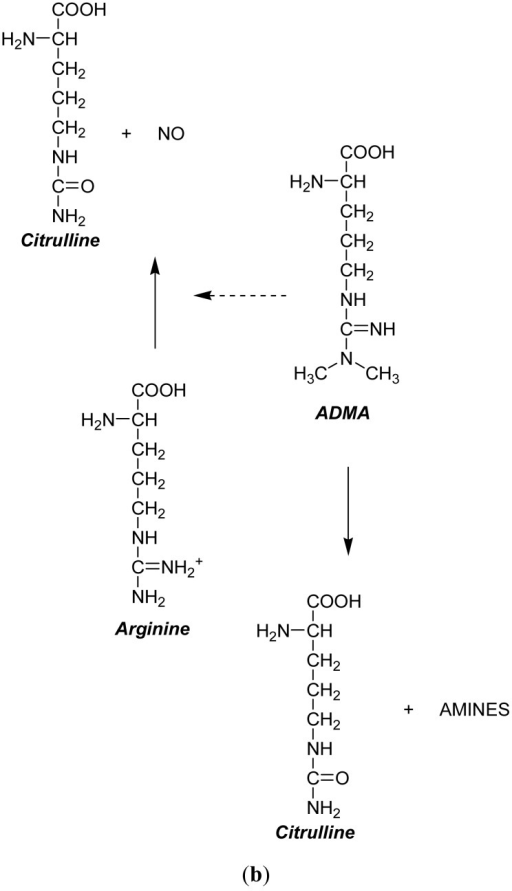 (a) Arginine-nitric oxide metabolic pathway. The abbreviations stand for the following compounds: nitric oxide synthase (NOS), asymmetric dimethylarginine (ADMA), nitric oxide (NO), protein arginine methyltransferase (PRMT) and dimethylarginine dimethylaminohydrolase (DDAH); (b) Molecular diagram illustrating the inhibitory role of asymmetric dimethylarginine (ADMA) on nitric oxide (NO) production.