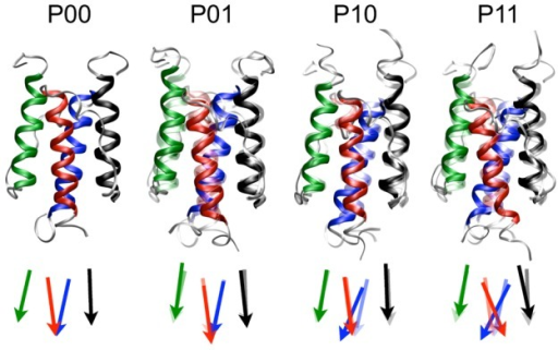 The four states of HAMP: P00, P10, P01, P11.Ribbon representations and schematic representations of the four states, with black N1; red C1; green N2; blue C2. Conformation  is rendered transparent in the depictions of states ,  and  to illustrate the differences.