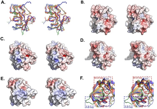 Cross-eyed stereoscopic representations of 2Apro structures.(A) Superimposition of backbones of the four proteases showing their structural similarity. Pairwise rmsd values for C2 relative to both A2 and CB4 proteases are both 1.809 Å, while to EV71 protease is 1.4 Å. Poisson-Boltzmann electrostatic potential surfaces are illustrated by PyMOL [29] for (B) C2, (C) A2,(D) CB4 and (E) EV71 2Apro. Each structure is shown in the same orientation. (F) Comparison of the positions of the bll−cll and cll−dll loops in the structures of C2 (blue), A2 (red), CB4 (green), and EV71 (orange) 2Apro.