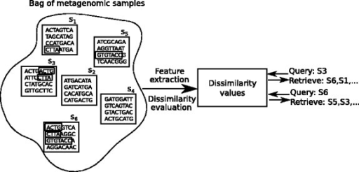 Given a set of metagenomic samples, our objective is to be able to retrieve relevant samples to a query sample. For this, we need to extract relevant features and evaluate a pairwise similarity (or dissimilarity) measure. The samples are then ranked in the order of increasing dissimilarity from the query