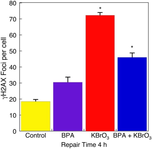 Strand break signaling by γH2AX in Ku70-deficient cells.γH2AX foci were measured at 4 h after exposure to BPA alone, KBrO3 alone, and after co-exposure (see Material and Methods). Each bar represents mean ± SEM of three independent experiments (*p < 0.05 vs. control).