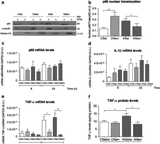 Effect of nicotinamide or saline on p65 translocation; on p65, IL-1β and TNF-α mRNA levels, and on ELISA TNF-α protein levels in mesencephalon of asphyxia-exposed and control rats. Caesarean-delivered control (CS) and asphyxia-exposed (AS) rats were treated with a single dose of nicotinamide (0.8 mmol/kg, i.p.) (CNam, ANam) or saline (0.1 ml, i.p.) (CSal, ASal), 1 h after delivery, euthanized at 8 or 24 h after birth. Selected brain tissue was treated for Western blots, RT-qPCR or ELISA. a Representative immunoblots for p65, α-tubulin and histone H4 levels, measured in cytoplasmic (c) and nuclear (n) protein extracts. b Nuclear p65 levels normalized to total p65. c De novo synthesis of p65, d IL-1β and e TNF-α, measured by RT-qPCR 8 h and/or 24 h after delivery (data analysed in triplicates with MxPro software, normalized to GAPDH mRNA levels). f TNF-α protein levels measured in total protein extracts with Quantikine® ELISA Rat (normalized by mg of protein for each sample, in duplicate) (CSal open columns, CNam dashed columns, ASal grey columns, ANam doubled dashed columns). Pair-wise comparisons analysed with Student t test (*p < 0.05, **p < 0.005)