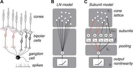 OFF midget RGC anatomy and modeling framework.(A) Bipol ...