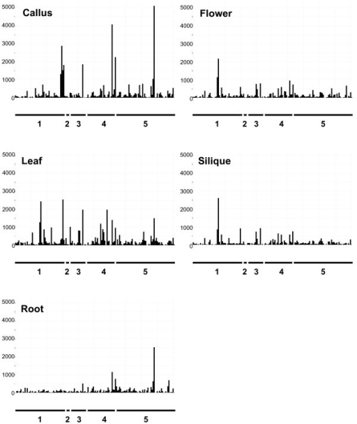 The expression level of 162 NBS-LRR-encoding and related genes in five different tissues of Arabidopsis wild-type Col-0. All NBS-LRR-encoding and related genes are ordered according to their At numbers along the X axis. Each Arabidopsis chromosome is indicated below each graph. Y-axis indicates the relative expression level of each probe set after scaling the mean intensity of each ATH1 microarray to 500.