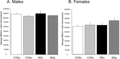 Number of newborn surviving cells (BrdU+) in the dentate gyrus on PND21.There was a significant effect of sex, but not of treatment on BrdU positive cell numbers. A. Maternal deprivation did not alter BrdU+ cell numbers in males (F(3,28) = 0.40, p = 0.75), or (B) females (F(3,28) = 1.1, p = 0.37). Irrespective of MD, females had an overall lower number of BrdU-positive cells (F(1,51) = 29.8; p<0.0001).