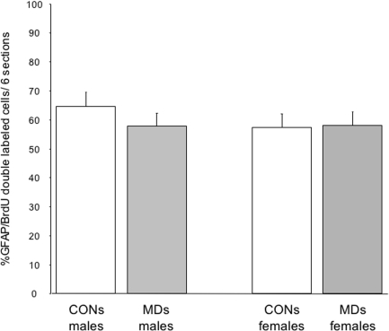 Percentage of GFAP/BrdU double-labeled cells in the dentate gyrus.There was no effect of MD on the percentage of double labeled cells in both males and females (F(3,24) = 0.40; p = 0.54). No effect of sex was found (F(1,24) = 0.56; p = 0.46).