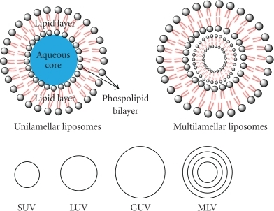 liposome thesis Characterize liposomal formulations that contain methanol extract of aerial parts  of p  liposomes containing mathanol extract were  pharmd student thesis.