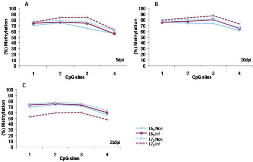 CD4 promoter methylation levels at 5 (A), 10 (B) and 21dpi (C). Pyrosequencing result of the promoter methylation level of CD4 gene before and after MDV infection at different time points. A decrease of promoter methylation level was observed only L72 chickens. 5dpi: 5 days post infection; 10dpi: 10 days post infection; 21dpi: 21 days post infection. L63.Non: noninfected control of L63 chicken; L63.Inf: infected L63 chicken; L72.Non: noninfected control of L63 chicken; L63.Inf: infected L63 chicken. n=4 for each line.