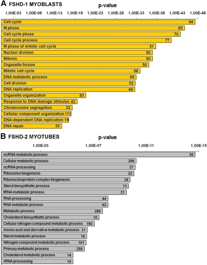 Selected gene classifications according to biological processes.Biological processes significantly enriched in the set of genes identified by microarray as up- or down-regulated in A) FSHD-1 myoblasts, and B) in FSHD-2 myotubes, and categorized in the DAVID program. Numbers in the bars indicate the number of genes assigned to each gene ontology term. p-value <0.05.