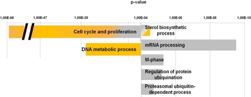 Selected gene classifications according to biological processes of genes regulated in the three differentiation programs.Diagram showing the biological processes significantly enriched in the set of genes differentially expressed in the differentiation processes of FSHD-1 (yellow bars) and FSHD-2 (grey bars) cells in respect to control. Bar on the left indicated the biological process modulated in control but not in FSHD-1 (yellow bar), and FSHD-2 (grey bars) cells, whereas bars on the right indicated the biological processes modulated in FSHD-1 (yellow bar) and FSHD-2 (grey bars) but not in control cells. All bars group many related GO categories. p-value <10−4.