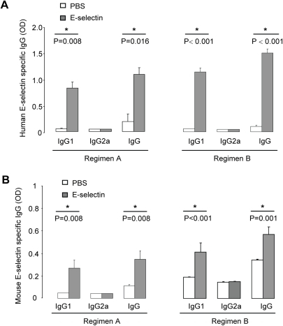 Serum E-selectin specific antibodies.Serum was collected after 7 weeks on a high-fat diet. (A) Human E-selectin specific IgG1, IgG2a and total IgG in mice on regimen A (N = 5 per group) or regimen B (N = 24 for PBS group, N = 23 for E-selectin group). (B) Mouse E-selectin specific IgG1, IgG2a and total IgG in mice on regimen A (N = 5 per group) or regimen B (N = 24 for PBS group, N = 23 for E-selectin group).