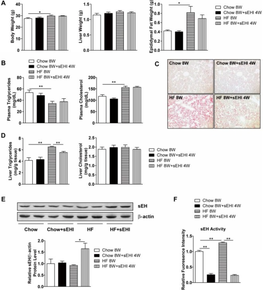 4-week sEH inhibitor administration attenuated 8-week HF-diet–induced triglycerides accumulation in mouse liver.Male C57BL/6 mice were fed regular chow or a HF diet for 8 weeks with or without sEH inhibitor (sEHI) t-AUCB administration in drinking water from week 5 (n=8 mice/group). (A) Body weight, liver weight and epididymal fat weight. (B) Plasma levels of triglycerides and cholesterol. (C) Oil-red O staining in liver sections. (D) Levels of triglycerides and cholesterol in liver. (E) Western blot analysis of protein levels of sEH and β-actin as a normalization control in liver. (F) sEH activity in liver. Data are mean ± SEM. (* P<0.05, ** P<0.01).