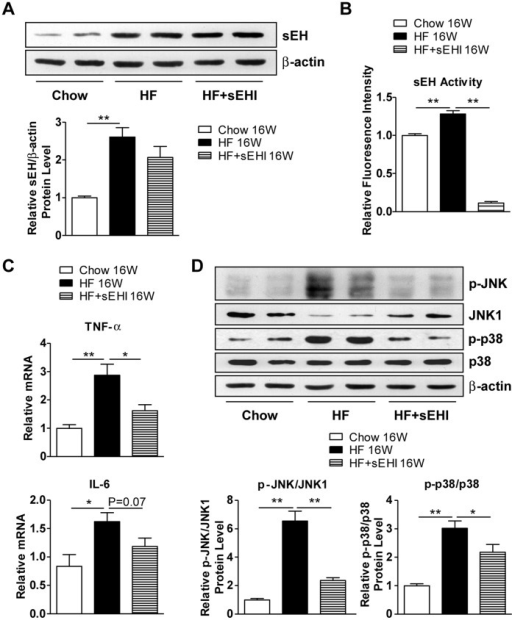 sEH inhibition decreased 16-week HF-diet–induced activation of inflammatory pathways in the liver.Male C57BL/6 mice were fed a regular chow or HF diet for 16 weeks with or without sEHI t-AUCB in drinking water starting 3 days before diet. (A) Western blot analysis of protein levels of sEH and β-actin as a normalization control in liver. (B) sEH activity in liver. (C) Quantitative RT-PCR analysis of mRNA levels of TNF-α and IL-6 in liver. (D) Western blot analysis of protein levels of phosphorylated Jun N-terminal kinase (p-JNK), JNK1, p-p38, p38 and β-actin and relative protein content compared to that of JNK1 or p38. Data are mean ± SEM. (* P<0.05, ** P<0.01).