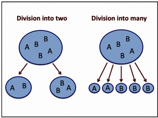 Division mechanism.When a protocell reaches the maximum size , it splits. Here we consider two splitting mechanisms. In the first case the protocell splits into two daughter protocells, of random composition, with each protocell containing at least one sequence. In the second case, the protocell splits into  daughter protocells, and each daughter protocell contains a sequence.