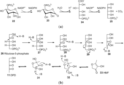 (a) Generation of d-ribulose-5-phosohate in the OPP pathway; (b) Degradation pathway of Ru5P to form 4,5-dihydroxy-2,3-dipentadione and HMF.