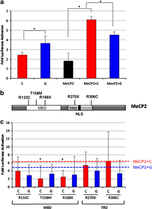 Functional characterization of MeCP2 and MECP2 mutations on MET transcriptional activation. (a) Luciferase reporter assays demonstrate differential activation of the MET promoter by MeCP2. MET luciferase reporter constructs containing rs1858830 G or C were transiently transfected into HEK cells with or without addition of MECP2 cDNA. *P<0.001. (b) Schematic of the MeCP2 protein structure with common RTT-causing mutations (MBD; TRD, transcription repressor domain; NLS, nuclear localization signal). (c) Luciferase assays of MECP2 mutations cotransfected with MET promoter luciferase showed altered transcription compared with wild-type MECP2. (red line-rs1858830 C allele+WT MECP2; blue line-rs1858830 G allele+WT MECP2). *P<0.05 compared with rs1858830 allele (G or C respectively)+ WT MECP2. Fold of luciferase activation was calculated after normalization against an empty luciferase control vector. All transfections were performed in triplicate.