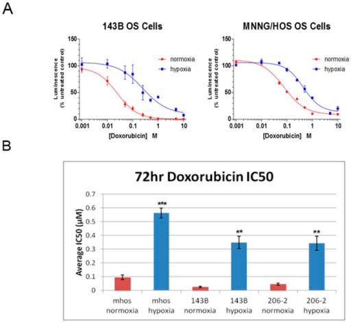 Hypoxia results in chemoresistance of human OS cells to doxorubicin.A, Dose-response curves for the 143B and MNNG/HOS (mHOS) cell lines treated with increasing concentrations of doxorubicin under normoxic and hypoxic conditions (72 hour, 0.5% O2). Luminescence (viability) was determined as a percent of untreated control (0 µM doxorubicin). B, Average half maximal inhibitory concentration (IC50) values were obtained from the dose-response curves and compared between normoxic and hypoxic conditions for the cell lines MNNG/HOS (mHOS), 143B, and a patient-derived OS cell line, 206-2. Asterisks indicate statistical significance (**p<0.01, ***p<0.001).