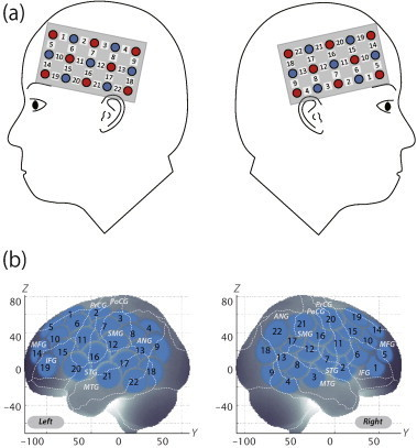 Spatial profiles of fNIRS channels. a) Left and right side views of the probe arrangements. fNIRS channel orientation is also illustrated. Detectors are shown as blue circles, illuminators as red circles, and channels as white squares. Corresponding channel numbers are indicated in black. b) Channel locations on the brain. Right- and left-side views are illustrated. Statistically estimated fNIRS channel locations (centers of blue circles) for control and ADHD subjects, and their spatial variability (SDs, radii of the blue circles) associated with the estimation are exhibited in MNI space.