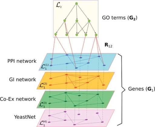 Schematic representation of datasets used in this study. Two types of objects are represented: genes interconnected via four types of interaction networks (PPI, GI, Co-Ex and YeastNet) and GO terms interconnected via directed semantic relations from GO hierarchy
