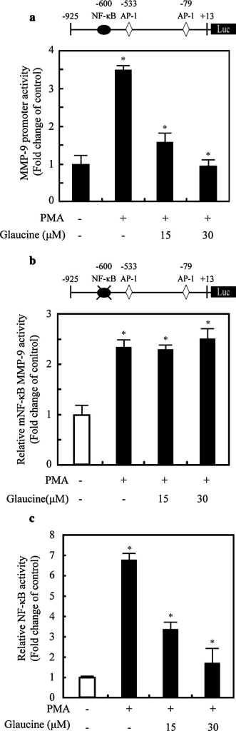 Glaucine inhibits the transcriptional activity of MMP-9 promoter via suppression of PMA-stimulated NF-κB activity. a MCF-7 cells were transfected with the pMMP-9-luciferase and the pSV40-β-galactosidase vectors. The transfected cells were treated with the indicated concentrations of glaucine for 30 min and stimulated with 100 nM PMA for 9 h. The luciferase activity was normalized by β-galactosidase activity. Each value represents the mean ± SD of three independent experiments and is expressed relative to a control. b MCF-7 cells were transfected with NF-κB binding site mutant (mNF-κB) MMP-9-Luc. The transfected cells were treated with glaucine for 30 min and stimulated with 100 nM PMA for 9 h. The luciferase activity was normalized by β-galactosidase activity. Each value represents the mean ± SD of three independent experiments and is expressed relative to a control. One-way ANOVA was performed to determine statistical significance (*P < 0.05). c MCF-7 cells were transfected with the reporter plasmids containing tandem NF-κB binding sites. After 24 h, cells were treated with or without 100 nM PMA for 9 h and the luciferase activities were determined. Each value represents the mean ± SD of three independent experiments and is expressed relative to a control. One-way ANOVA was performed to determine statistical significance (*P < 0.05)
