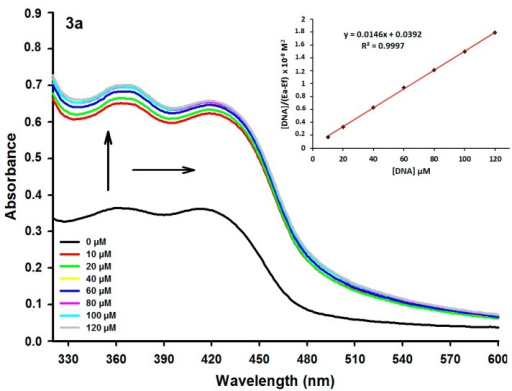 Absorption spectra of derivative 3a (50 µM) with increasing concentrations of calf thymus DNA (ctDNA). [DNA] = 0, 10, 20, 40, 60, 80, 100 and 120 µM. Arrows (↑) and (→) refer to hyperchromic, and bathchromic effects, respectively. Inset: Plot of [DNA]/(εa − εf) as function of DNA concentration as determined from the absorption spectral data.