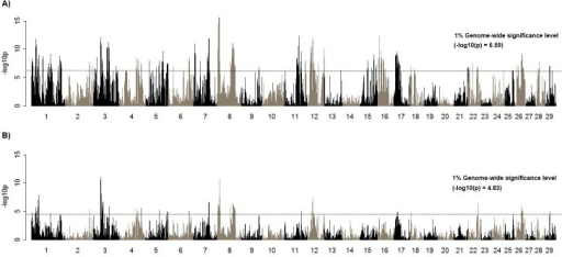 Association between DPR and the most frequent haplotype using additive (A) and recessive model (B).Each bar demonstrates the association of DPR and haplotype that is defined by the 50-SNP window. Association of DPR and the most frequent haplotype (A) or homozygous status of the most frequent haplotype (B) represents an additive or recessive effect. Genome-wide significance level is shown on each plot.