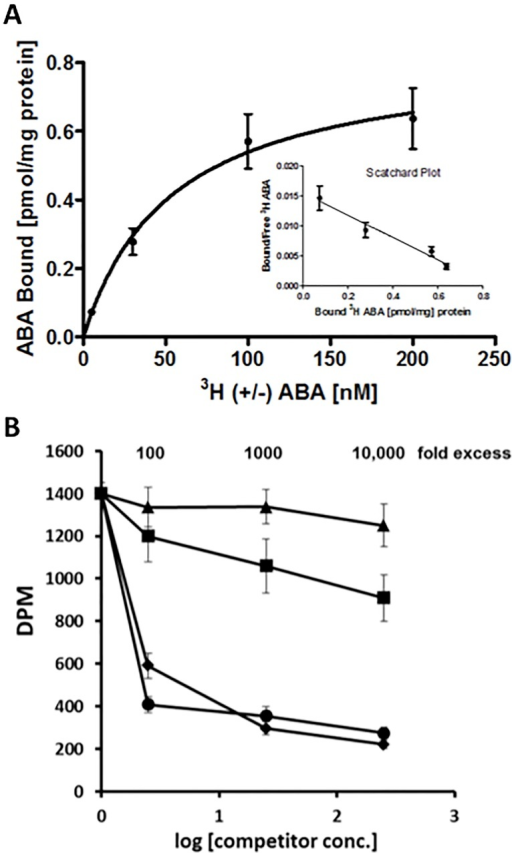 ABA binds to spinach Rubisco with high affinity.A) Saturation curve and Scatchard plot representing specific binding of [3H]-(±)-ABA, as a difference between total and non-specific binding signal. B) Competition Binding Assay. Displacement of 25 nM (±) [3H]ABA by non-radiolabeled (+) ABA (diamonds), (-) ABA (circles), PA (squares) and trans-(+) ABA (triangle) at the indicated concentrations.