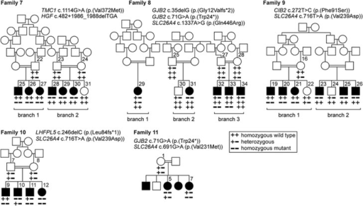 Pedigrees in which linkage analysis and/or NGS were used to identify intra-familial or intra-sibship locus heterogeneity. In families 7–10, linkage analysis and homozygosity mapping prior to NGS helped to identify the causal variant. Families 8, 10 and 11 demonstrate intra-sibship locus heterogeneity. For family 11, the parents are known to be related (double bars), but the exact relationship is unknown.