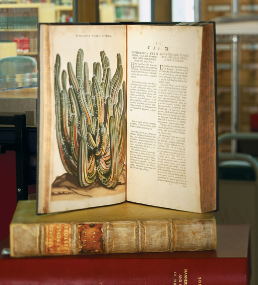 <p>Image of two facing pages from Horti medici Amstelodamensis, vol. 1. The open book is displayed atop other books. The illustration faces p. 21, which contains text in Latin. Illustration shows the plant &quot;Euphorbium cerei&quot; from the North African coast. This plant is reputed to be a powerful cathartic.</p>