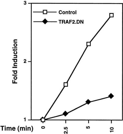 TRANCE-R signaling is dependent on TRAF2.  Thymocytes from transgenic  mice expressing TRAF2.DN or  control littermates were stimulated with hCD8-TRANCE (1  μg/ml) on OKT8-coated (10  μg/ml) plates for the indicated  amount of time then assayed for  JNK activity. The degree of JNK  activation was analyzed on a phosphorimager (Molecular Imager  System; Bio-Rad Laboratories,  Hercules, CA) and plotted as  fold induction over time 0. Representative results of three independent experiments are shown.