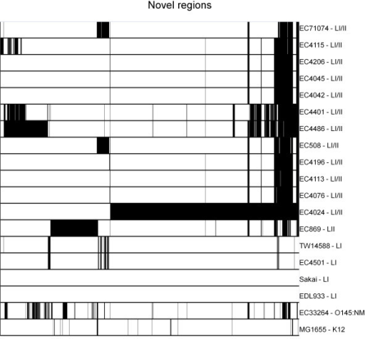 Novel regions distribution among the E. coli strains in Table 1. The distribution of 1456 regions ~500 bp in size among 17 E. coli O157:H7 strains and the O145:NM strain EC33264 and K12 strain MG1655. Regions are not necessarily contiguous and are defined as novel based on less than 80% sequence identity to the genome of either  EDL933 or Sakai. Black indicates the presence of a region and white indicates the absence of a region.
