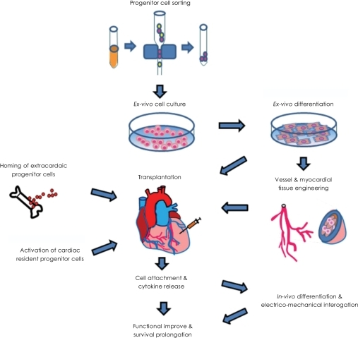 Schematic flow-diagram of stem cell therapy in cardiac disease. There ...