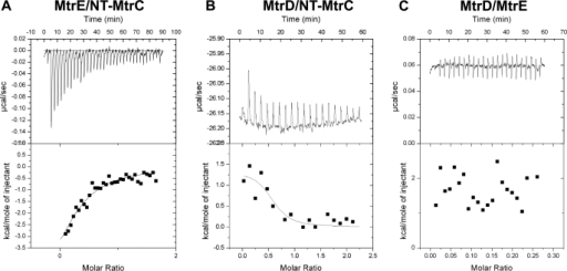 ITC analyses of the interaction of MtrC, MtrD, and MtrE. 200 μm NT-MtrC was titrated into (A) 15 μm MtrE and (B) 12 μm MtrD; and in (C) 15 μm MtrE was titrated into 12 μm MtrD in a VP-ITC microcalorimeter and the heat exchange determined at 25 °C. In each case, the upper panel shows the raw energy changes during the titration, while the lower panel represents the derived integrated total energy change as a function of the molar ratio (based on the molecular weight of the monomeric protein) of the interactants. Non-linear regression fitting of the data (shown as a solid line through the data points in the lower panel) to a monophasic one-site model yielded the following thermodynamic parameters for the interaction: the interaction of Nt-MtrC with MtrE was characterized by a Ka, ΔH and ΔS of 1.0 (±0.50) × 105 m−1, −6836 (±3575) cal·mol−1 and −0.01 cal·mol−1·K−1; while the interaction of Nt-MtrC with MtrD was characterized by a Ka, ΔH, and ΔS of 1.2 (±1.0) × 106 m−1, 1412 (±318) cal·mol−1 and 32.5 cal·mol−1·K−1.