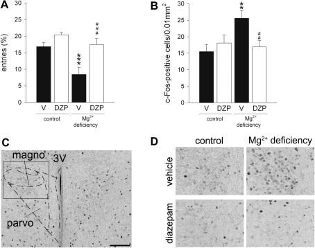 Effect of Mg2+ deficiency and diazepam treatment (1 mg/kg, i.p.) on behaviour and c-Fos expression in the paraventricular hypothalamic nucleus (PVN) of BALB/c mice following exposure to the open arm of an elevated plus maze. A. In mice fed a Mg2+ restricted diet the anxiety-related behaviour was elevated as indicated by the number of entries into the (anxiogenic) distal compartment of the open arm. Treatment with diazepam normalised this anxious phenotype. B. Compared with vehicle-treated controls, c-Fos induction was increased in the magnocellular portion of the PVN in Mg2+ deficient mice and was reversed by diazepam treatment. C. Representative photograph (scale bar = 100 μm) showing delineation of the PVN regions analysed with the help of a mouse brain atlas (Paxinos and Franklin, 2001). D. High magnification photograph showing c-Fos-positive cells in the magnocellular portion of the PVN in all experimental groups. Data represent mean ± SEM. n = 10 per experimental group. *P < 0.05, ***P < 0.001 for Mg2+ deficient vs. control mice, ###P < 0.001 for diazepam vs. vehicle. 3V: third ventricle; DZP: diazepam; magno: magnocellular portion of the PVN; parvo: parvocellular portion of the PVN; V: vehicle.
